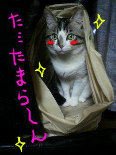 ふくろ3.jpg